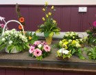 Special Floral Hobby Afternoons June 2015 part two